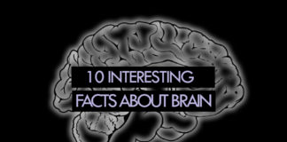 Brain Facts, Interesting Facts about Brain