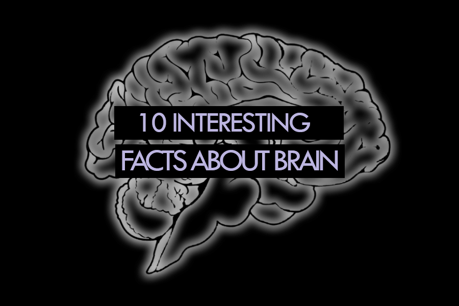 interesting facts about brain illusions and how it works Watch this lesson with fun facts about the brain for kids jeremiah teaches interesting facts about the human brain in this educational cartoon for students hang out with us as we teach you how your brain works.
